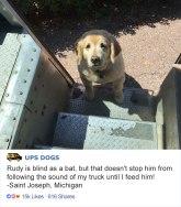 ups-dogs-facebook-group-drivers-meet-routes-sean-mccarren-03a