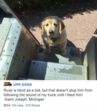 ups-dogs-facebook-group-drivers-meet-routes-sean-mccarren-03a