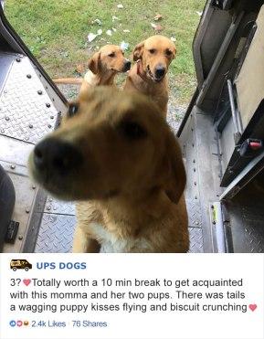 ups-dogs-facebook-group-drivers-meet-routes-sean-mccarren-05