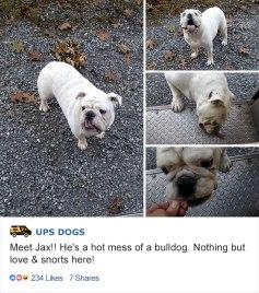 ups-dogs-facebook-group-drivers-meet-routes-sean-mccarren-08