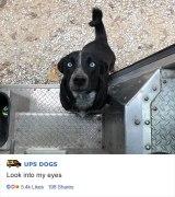 ups-dogs-facebook-group-drivers-meet-routes-sean-mccarren-09