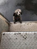 ups-dogs-facebook-group-drivers-meet-routes-sean-mccarren-41