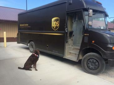 ups-dogs-facebook-group-drivers-meet-routes-sean-mccarren-43