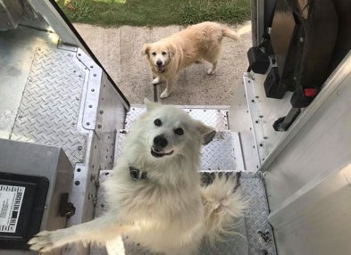 ups-dogs-facebook-group-drivers-meet-routes-sean-mccarren-57