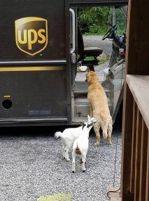 ups-dogs-facebook-group-drivers-meet-routes-sean-mccarren-7