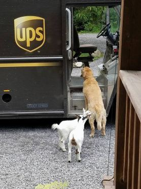 ups-dogs-facebook-group-drivers-meet-routes-sean-mccarren-7