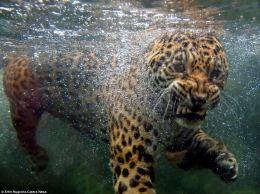 jagswim2