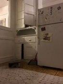 cat-hiding-photo-pierogi-grace-spelman-19-5a3133dccbe83__700