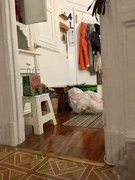 cat-hiding-photo-pierogi-grace-spelman-2