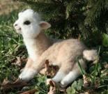 alpaca-4201348 (2)