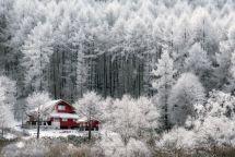 beautiful-winter-photos-naagaoshi-japan-13-5a55c93c6dbc7__880