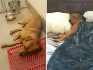 happy-dogs-before-after-adoption-12-5a950af052a96__880
