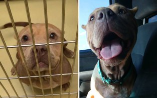 happy-dogs-before-after-adoption-14-5a95364c45fb7__880