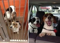 happy-dogs-before-after-adoption-15-5a95370e3b911__880