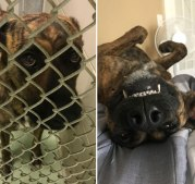 happy-dogs-before-after-adoption-16-5a95360519ced__880