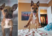 happy-dogs-before-after-adoption-28-5a953752b95cb__880