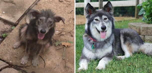 happy-dogs-before-after-adoption-33-5a95366e6962d__880