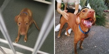 happy-dogs-before-after-adoption-38-5a951b8576b08__880