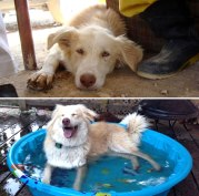 happy-dogs-before-after-adoption-39-5a95362c71d62__880