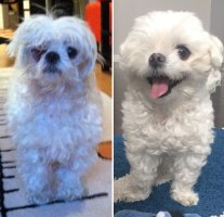 happy-dogs-before-after-adoption-40-5a951b170bea0__880