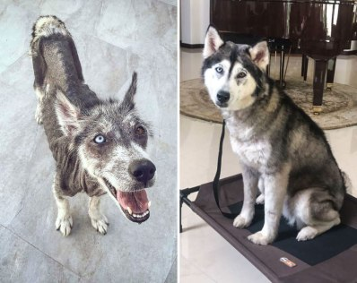 happy-dogs-before-after-adoption-41-5a951d651a303__880