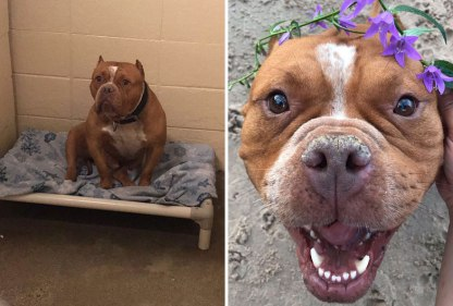 happy-dogs-before-after-adoption-43-5a951e57cb9ee__880