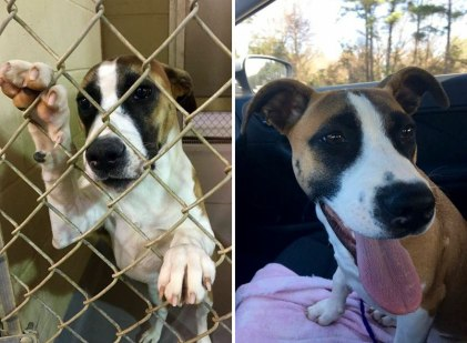 happy-dogs-before-after-adoption-46-5a9526f65f804__880