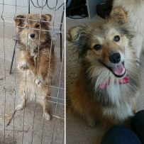 happy-dogs-before-after-adoption-48-5a95286fd1d39__880