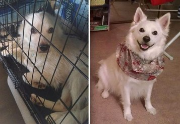 happy-dogs-before-after-adoption-5a950e7195183__880