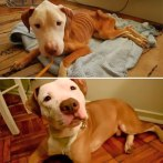 happy-dogs-before-after-adoption-73-5a953247bb830__880