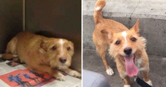 happy-dogs-before-after-adoption-74-5a9532b337cae__880