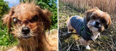 happy-dogs-before-after-adoption-76-5a953383e7809__880