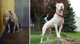 happy-dogs-before-after-adoption-79-5a9544efa99c9__880