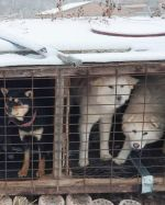American-skier-saves-90-dogs-at-South-Korea-Olympics-5a951133e6809__700