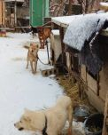 American-skier-saves-90-dogs-at-South-Korea-Olympics-5a951139021ce__700
