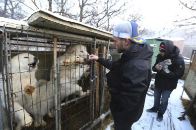 American-skier-saves-90-dogs-at-South-Korea-Olympics-5a9518ccdfcf8__700