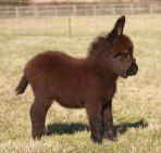 cute-miniature-baby-donkeys-10-5aa924edf2b81__605