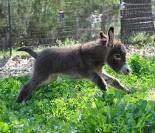 cute-miniature-baby-donkeys-67-5aa936dccb196__605