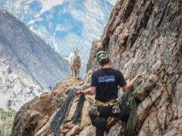 goat11