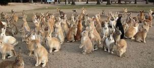 rabbit-island-rabbits