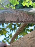 Tree limb rubbing on wall.