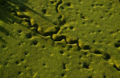 WWI trenches, grown over.