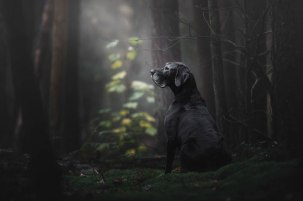 dog-photographer-of-the-year-2018-winners-the-kennel-club-1-5b5197783d276__700