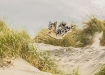 dog-photographer-of-the-year-2018-winners-the-kennel-club-11-5b51978b76054__700