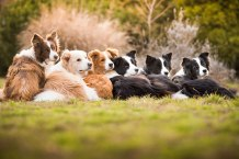 dog-photographer-of-the-year-2018-winners-the-kennel-club-28-5b5197af70f50__700