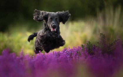 dog-photographer-of-the-year-2018-winners-the-kennel-club-31-5b5197b56395f__700