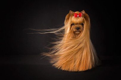 dog-photographer-of-the-year-2018-winners-the-kennel-club-35-5b5197bd542d6__700