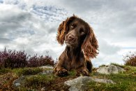 dog-photographer-of-the-year-2018-winners-the-kennel-club-36-5b5197bf959c6__700