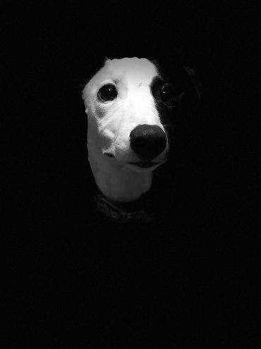 dog-photographer-of-the-year-2018-winners-the-kennel-club-45-5b51dd75f1a6b__700