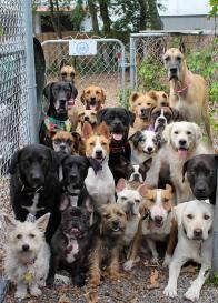 doggroupselfie